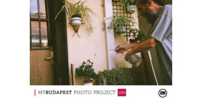 Mindenkinek jár a törődés - növények Budapest
